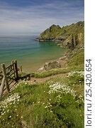Купить «Coastal path at Prawle Point, South Devon, 2007», фото № 25420654, снято 19 июля 2018 г. (c) Nature Picture Library / Фотобанк Лори