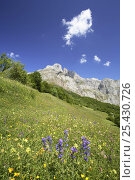 Купить «Upland meadow in flower, Picos de Europa, Asturias, Spain», фото № 25430726, снято 17 августа 2018 г. (c) Nature Picture Library / Фотобанк Лори