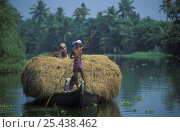 Купить «Men bringing in the hay crop, the backwaters, Kerala, India», фото № 25438462, снято 18 сентября 2018 г. (c) Nature Picture Library / Фотобанк Лори
