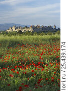 Купить «Medieval Cite and a poppy field, Carcassonne, Languedoc, France», фото № 25439174, снято 22 апреля 2018 г. (c) Nature Picture Library / Фотобанк Лори