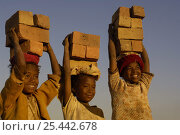 Купить «Children carrying bricks made by digging up surrounding soil, individually moulding the bricks, building kilns and using large quantities of fire wood. Madagascar», фото № 25442678, снято 20 августа 2018 г. (c) Nature Picture Library / Фотобанк Лори