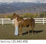 Купить «Woman handling chestnut Arabian gelding in field, Boulder, Colorado, USA», фото № 25443458, снято 19 августа 2018 г. (c) Nature Picture Library / Фотобанк Лори