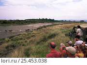 Купить «Safari tourists watching migrating herd of Wildebeest cross river, Masai Mara reserve, Kenya», фото № 25453038, снято 23 июля 2018 г. (c) Nature Picture Library / Фотобанк Лори