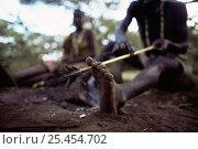 Купить «Hadzabe tribesman fashioning arrow at camp, Lake Eyasi Basin, Tanzania 2006», фото № 25454702, снято 14 ноября 2019 г. (c) Nature Picture Library / Фотобанк Лори