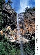 Купить «Purling Brook Falls, Springbrook NP, Queensland, Australia», фото № 25465770, снято 21 августа 2018 г. (c) Nature Picture Library / Фотобанк Лори