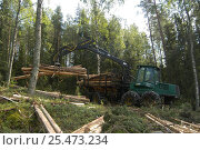 Harvesting coniferous forest, Joensuu, Finland. Стоковое фото, фотограф Mark Payne-Gill / Nature Picture Library / Фотобанк Лори