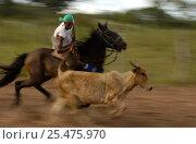 Купить «Brazilian 'Vaquieros' cowboys at rodeo, S Gonzalo Town, Piaui State, Brazil», фото № 25475970, снято 26 апреля 2018 г. (c) Nature Picture Library / Фотобанк Лори
