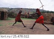 Купить «Maasai warriors traditional sport of stick fighting, Olonana village, Kenya», фото № 25478022, снято 17 августа 2018 г. (c) Nature Picture Library / Фотобанк Лори