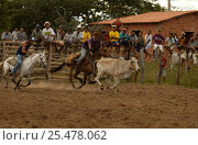 Купить «Brazilian 'Vaquieros' cowboys at rodeo, S Gonzalo Town, Piaui State, Brazil», фото № 25478062, снято 26 апреля 2018 г. (c) Nature Picture Library / Фотобанк Лори