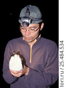Купить «Formosan long-eared bat held by scientist {Plecotus taivanus} Taiwan, endemic», фото № 25484534, снято 17 октября 2018 г. (c) Nature Picture Library / Фотобанк Лори