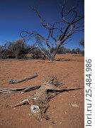 Купить «Kangaroo carcass in outback, Western Australia», фото № 25484986, снято 21 февраля 2018 г. (c) Nature Picture Library / Фотобанк Лори