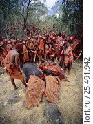 Maasai traditional E-unoto ceremony, Kedong Valley, Rift valley, Kenya. Ritual slaughter of ox. 1985. Стоковое фото, фотограф Jabruson / Nature Picture Library / Фотобанк Лори
