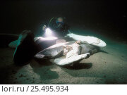 Купить «Diver examining shark carcasses on seabed finned alive and thrown overboard to drown, caught on longline hook, Cocos Island, Costa Rica, Pacific Ocean Model released.», фото № 25495934, снято 24 сентября 2018 г. (c) Nature Picture Library / Фотобанк Лори