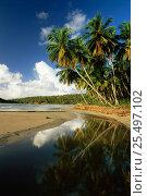 Coastal beach landscape at La Sagesse, Grenada, Caribbean. Стоковое фото, фотограф David Noton / Nature Picture Library / Фотобанк Лори