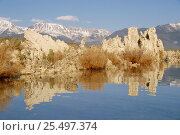Tufa limestone rock formations at edge of Mono Lake, Inyo National Park, California, USA. Стоковое фото, фотограф Ingo Arndt / Nature Picture Library / Фотобанк Лори