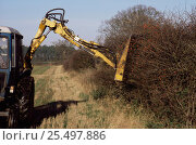 Купить «Hedge cutting in autumn (wrong time of year as berries are removed and birds cannot feed) UK», фото № 25497886, снято 19 августа 2018 г. (c) Nature Picture Library / Фотобанк Лори