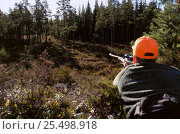 Купить «Man aiming gun at Moose {Alces alces} moose hunting The National Ritual Sweden.», фото № 25498918, снято 18 января 2019 г. (c) Nature Picture Library / Фотобанк Лори