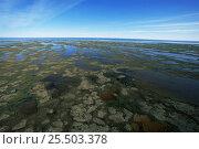 Купить «Aerial view of tundra in autumn, prime Polar bear habitat, Hudson Bay, Manitoba, Canada», фото № 25503378, снято 28 мая 2020 г. (c) Nature Picture Library / Фотобанк Лори