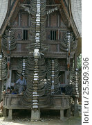 Купить «Tongkonan house facade with Buffalo horns from past sacrifices, Central Sulawesi, Indonesia 2000.», фото № 25509306, снято 22 апреля 2019 г. (c) Nature Picture Library / Фотобанк Лори