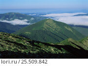 Купить «Looking down onto Sikhote-Alin range in summer, between 1200 - 1700m,  Primorsky region, Far East Russia (Ussuriland)», фото № 25509842, снято 28 сентября 2018 г. (c) Nature Picture Library / Фотобанк Лори