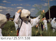 Купить «Protesters dressed as aliens pull up genetically modified (GM) test crop (oil seed rape) Model Farm, Watlington Oxfordshire 1999 July», фото № 25511538, снято 7 июля 2020 г. (c) Nature Picture Library / Фотобанк Лори