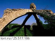 Купить «Remains of ancient ice house, Mariola mountain, Agres, Alicante, Spain, Europe.», фото № 25517186, снято 22 июля 2018 г. (c) Nature Picture Library / Фотобанк Лори