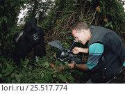 "Camerman Bruce Davidson filming male silverback gorilla ""Rafiki"", Virunga NP Dem Rep of Congo, Стоковое фото, фотограф Jabruson / Nature Picture Library / Фотобанк Лори"