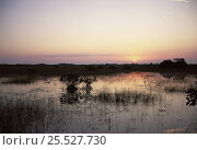 Купить «Red mangrove trees (Rhizophora mangle) at sunset, Everglades NP, Florida», фото № 25527730, снято 25 мая 2020 г. (c) Nature Picture Library / Фотобанк Лори