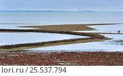Купить «Medieval fish lock at low tide on the island Ile de Re, Charente-Maritime, France September 2011», фото № 25537794, снято 23 февраля 2018 г. (c) Nature Picture Library / Фотобанк Лори