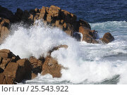 Купить «Strong waves crashing against rocks at Cape Woolamai's Pinnacles, pink granite sculptured by rain and sea, Phillip Island, Victoria, Australia», фото № 25543922, снято 17 августа 2018 г. (c) Nature Picture Library / Фотобанк Лори