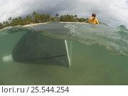 Купить «Lifeguard dragging net through stinger-resistant enclosure, checking for Irukandji and Box Jellyfish, Queensland, Australia 2006», фото № 25544254, снято 16 января 2018 г. (c) Nature Picture Library / Фотобанк Лори