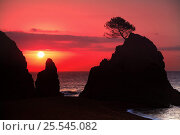 Купить «Silhouette of rocks and tree at sunset, Tossa de Mar, Gerona, Spain», фото № 25545082, снято 21 сентября 2018 г. (c) Nature Picture Library / Фотобанк Лори