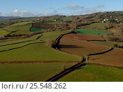 Купить «Aerial view of patchwork of  fields and hedges, Devon, UK.», фото № 25548262, снято 14 августа 2018 г. (c) Nature Picture Library / Фотобанк Лори
