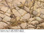 Купить «Фон треснувшие слои глины», фото № 25557422, снято 12 августа 2016 г. (c) Евгений Рашевский / Фотобанк Лори