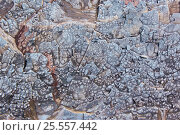 Купить «Узор на камне», фото № 25557442, снято 14 августа 2016 г. (c) Евгений Рашевский / Фотобанк Лори