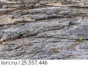 Купить «Пласты скальных пород», фото № 25557446, снято 14 августа 2016 г. (c) Евгений Рашевский / Фотобанк Лори