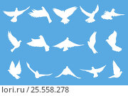 Купить «Set of flying doves on blue background», иллюстрация № 25558278 (c) Александр Подшивалов / Фотобанк Лори