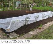 Купить «Спланированный участок для посадки газонной травы накрывают пленкой», фото № 25559770, снято 7 мая 2008 г. (c) Анатолий Заводсков / Фотобанк Лори