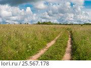 Купить «Проселочная дорога - колея через поле летом», фото № 25567178, снято 3 августа 2016 г. (c) Pukhov K / Фотобанк Лори