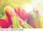 Купить «close up of tulip flowers», фото № 25571918, снято 28 января 2016 г. (c) Syda Productions / Фотобанк Лори