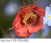 Оранжевый цветок (Flower) Стоковое фото, фотограф Владимир Борисов / Фотобанк Лори