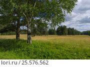 Русский пейзаж, фото № 25576562, снято 9 июля 2016 г. (c) Megapixx / Фотобанк Лори