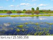 Купить «Spring - river overgrown with yellow flowers», фото № 25580358, снято 7 июня 2016 г. (c) Зезелина Марина / Фотобанк Лори
