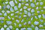 Grey stones and bright green grass between them, фото № 25580426, снято 4 мая 2016 г. (c) Зезелина Марина / Фотобанк Лори