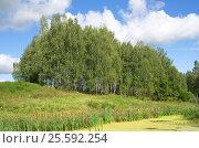 Купить «Летний пейзаж с березами у пруда», эксклюзивное фото № 25592254, снято 13 августа 2016 г. (c) Елена Коромыслова / Фотобанк Лори