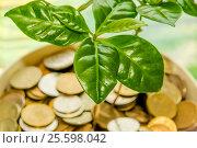 Купить «Зеленые листья растения на фоне денег», фото № 25598042, снято 28 мая 2014 г. (c) Сергеев Валерий / Фотобанк Лори