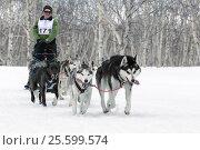 Купить «Камчатская гонка на собачьих упряжках», фото № 25599574, снято 13 апреля 2014 г. (c) А. А. Пирагис / Фотобанк Лори