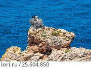 Купить «Nest of storks on rock.», фото № 25604850, снято 21 мая 2016 г. (c) Юрий Брыкайло / Фотобанк Лори