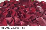 Купить «Bouquet of red roses with drops of water falling to background of the petals reverse slow motion stock footage video», видеоролик № 25606138, снято 11 февраля 2017 г. (c) Юлия Машкова / Фотобанк Лори