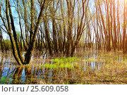 Купить «Spring landscape - spring forest riparian trees flooded with overflowing river water», фото № 25609058, снято 5 мая 2016 г. (c) Зезелина Марина / Фотобанк Лори